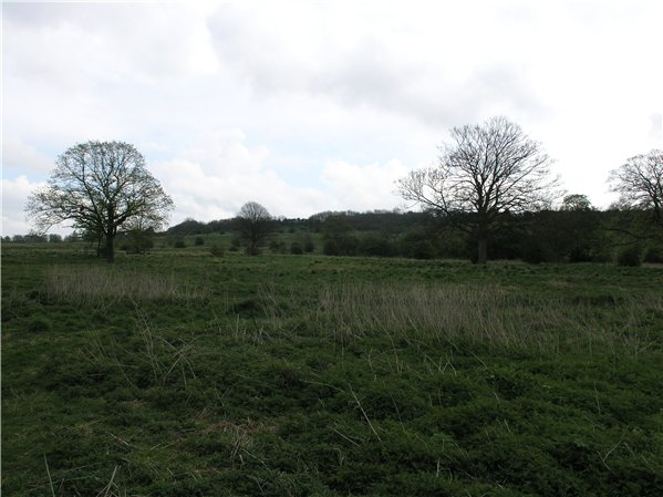 View up the escarpment of South Common
