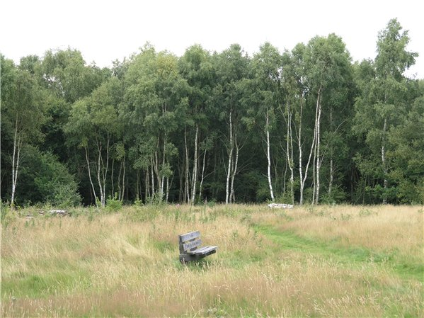 Acidic grassland in 'The Meadow' with birch woodland behind