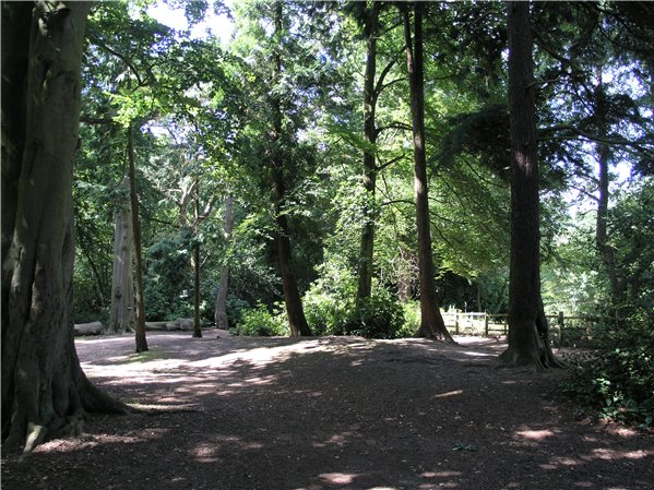 One of several areas of mature woodland within the park
