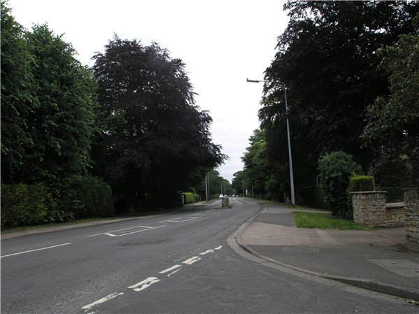Tall mature trees within the public/private boundary of houses along Doddington Road